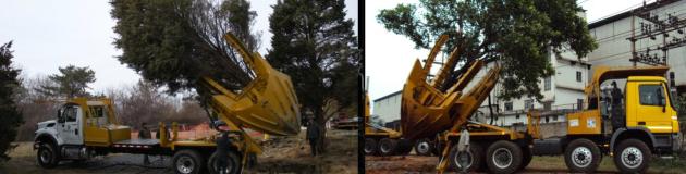 Big John 100D árbol Transplantadora